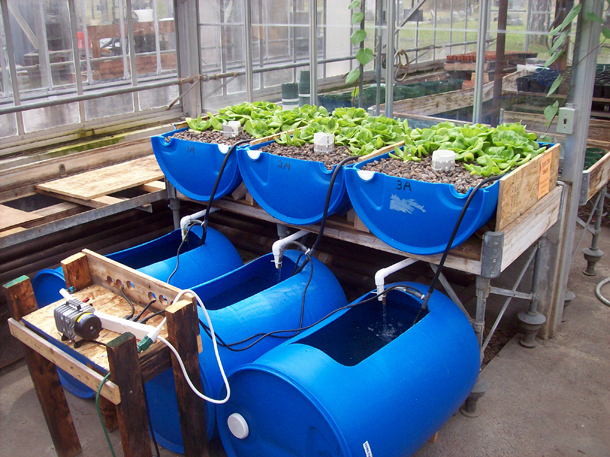 Aquaponics Course Cyprus Agro Industry Center