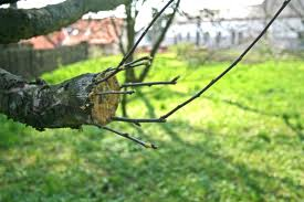 Tree Grafting Cyprus Agro Industry Center